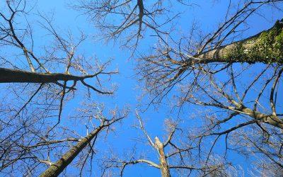 Covid-19 y confinamiento: cómo ayudar a los que se van o que estan en un estado crítico